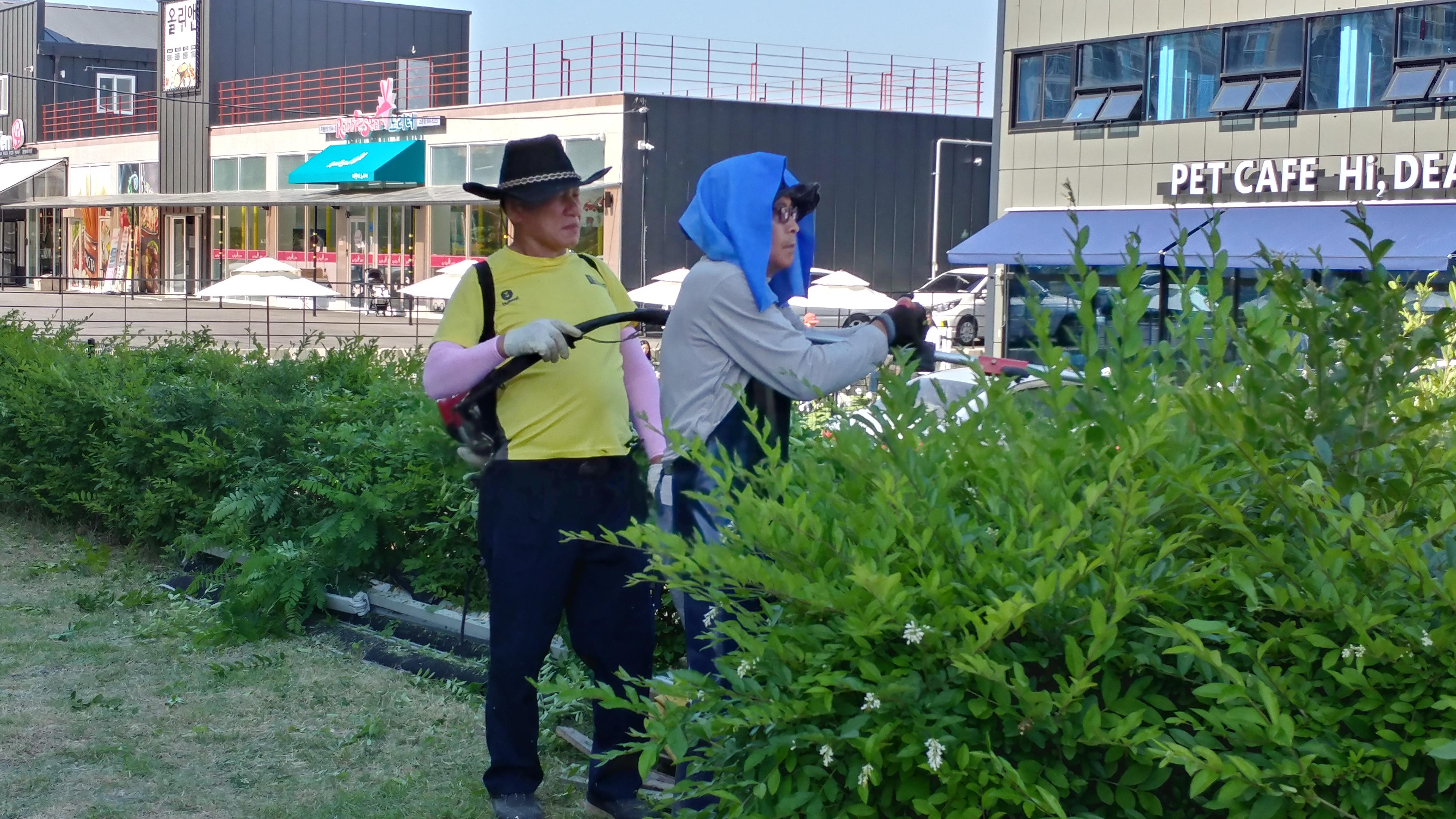 2018년 6월2일 잡초제거 및 옥상 방수작업